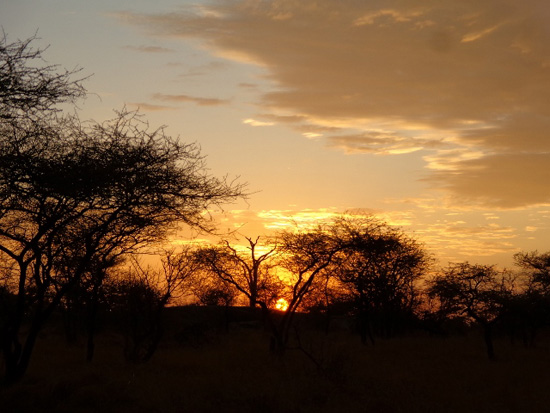 Anocheciendo en Serengeti