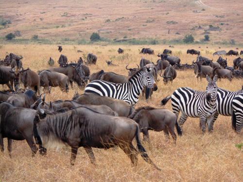 Migración en Serengeti