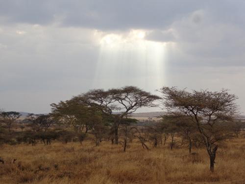 Paisaje Serengeti